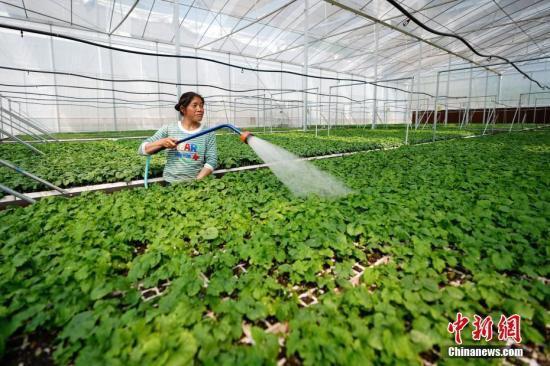 农业农村部:蔬菜可能出现价格大跌和滞销卖